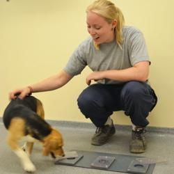 Uno de los beagles junto a una investigadora
