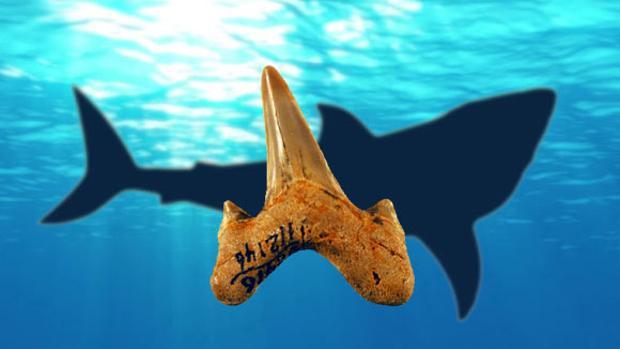 Paradoxodon significa «dientes paradójicos», porque son diferentes a los de sus pariente extintos