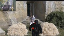 Una escena del vídeo mostrado a los simios