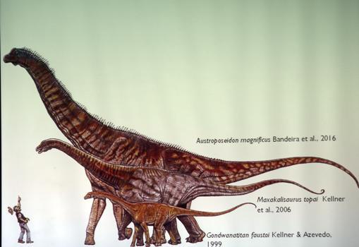 Presentación del «Austraposeidon magnificus», el mayor dinosaurio de brasil