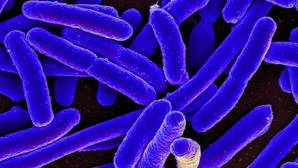 Una nueva arma para luchar contra las súperbacterias