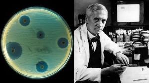 Penicilina, el antibiótico que revolucionó la medicina