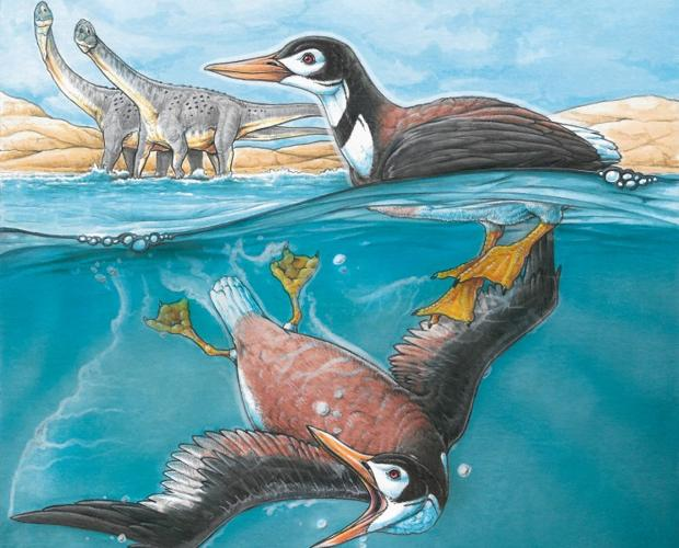 Reconstrucción del Vegavis iaai, el ave cuya siringe ha permitido realizar esta investigación sobre la capacidad de cantar de los dinosaurios