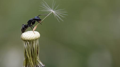 Ayudan a dispersar las semillas