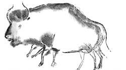 Bisonte estepario (Bison priscus) de la cueva de Chauvet (Ardèche, Francia)