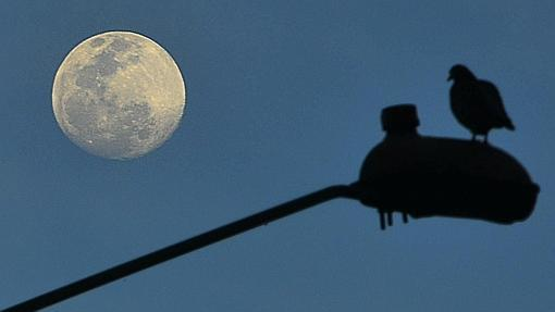 Algunas lunas llenas perigeicas apenas se aprecian