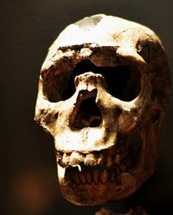 La evolución purgó muchos genes neandertales del genoma humano