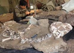 Los restos del Tongtianlong limosus