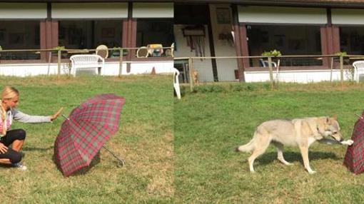 Una investigadora pone en práctica el experimento «Haz lo que yo hago» con un perro