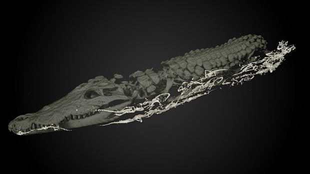 Tomografía del cocodrilo en el que pueden verse los cuerpos de las pequeñas crías momificadas