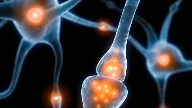 Las neuronas no necesitan estar activas para guardar un recuerdo