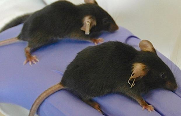 Resultado de imagen para Científicos españoles revierten el envejecimiento