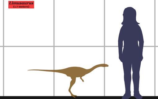 Tamaño aproximado de un Limusaurus adulto