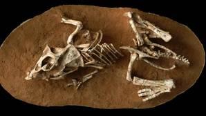 ¿Cuánto tiempo tardaba un dinosaurio en salir del cascarón?