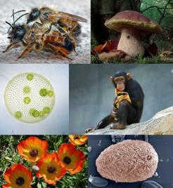 Las células eucariotas, más complejas, han permitido formar a animales, plantas u hongos, entre otros
