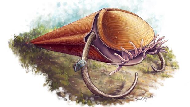 Un hiolito con sus dos helenos (una especie de cuernos) que le permiten alzarse sobre el suelo