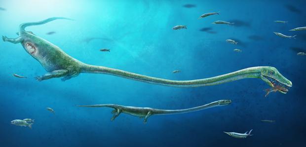 Recreación del Dinocephalosaurus que muestra la posición aproximada de la embrión dentro de la madre