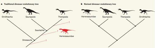 A la izquierda, el árbol evolutivo tradicional de los dinosaurios. A la derecha, el propuesto por los investigadores de Cambrige