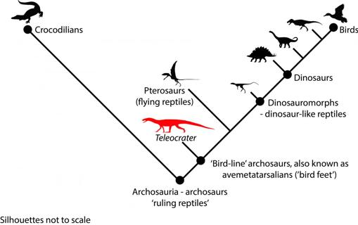 Relaciones taxonómicas de la especie Teleocrater rhadinus