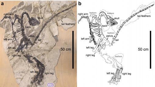 Espécimen encontrado en Lioaning, China
