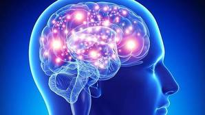 La parte del cerebro que no madura hasta los 36 años