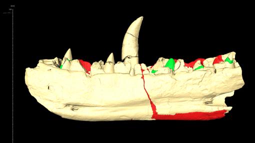 La mandíbula del megalosaurio