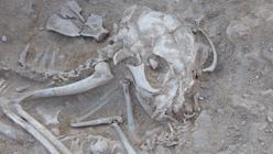 Restos de un gato en el sitio de Hieracómpolis