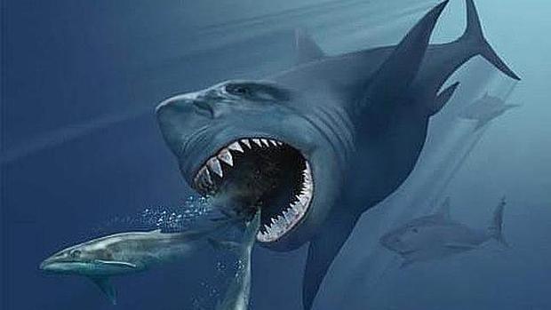 El megalodón medía casi 20 metros de longitud y pesaba 50 toneladas