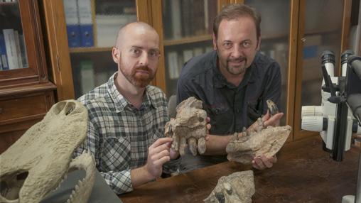 Los paleontólogos Cristiano Dal Sasso (derecha) y Simone Maganuco (izquierda) exhiben algunos huesos del cráneo del Razanandrongobe sakalavae en el Museo de Historia Natural de Milán