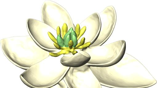 Posible aspecto de la primera flor