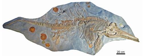 Esqueleto de ictiosaurio