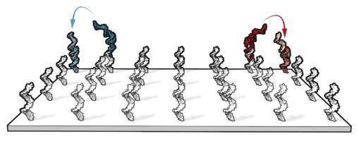Aspecto más realista de la superficie donde los nanobots de ADN se movieron