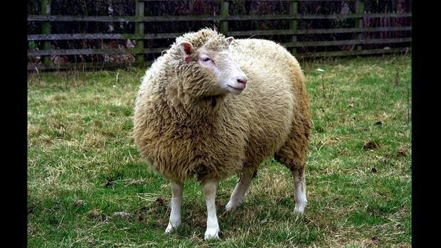 La oveja «Dolly»