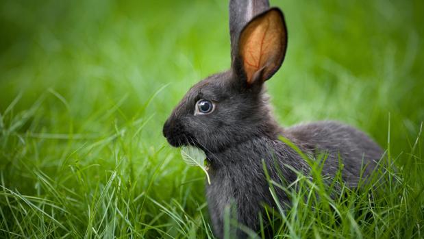 Un conejo moderno