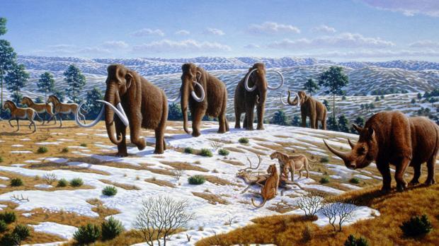 Fauna del Pleistoceno del Norte de España. La caza y la presencia humana acabaron con los grandes animales, lo que ha reducido el tamaño medio de los mamíferos en los continentes