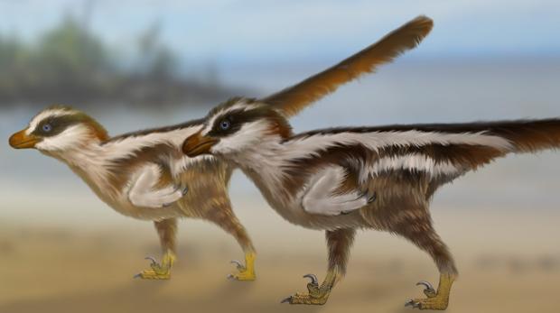 Los pequeños Dromaeosauriformipes rarus