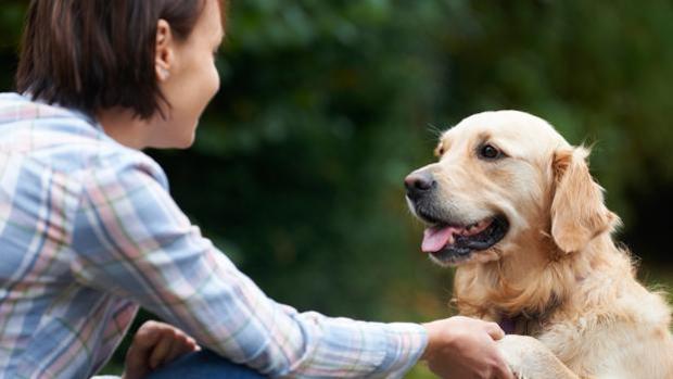 Los seis años es el momento perfecto para educar al perro
