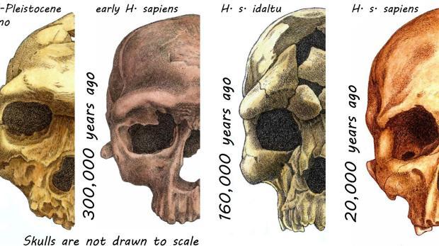 Varios cráneos de homininos hace decenas de miles de años