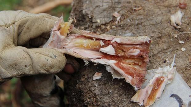 Descubren la primera despensa de la humanidad, con médula ósea de hace 400.000 años