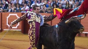 Manzanares, dos orejas en su plaza de Sevilla