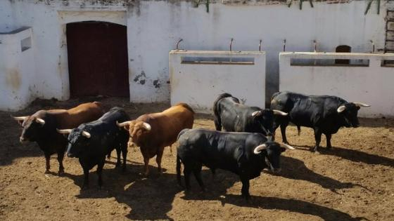 Los toros de esta tarde