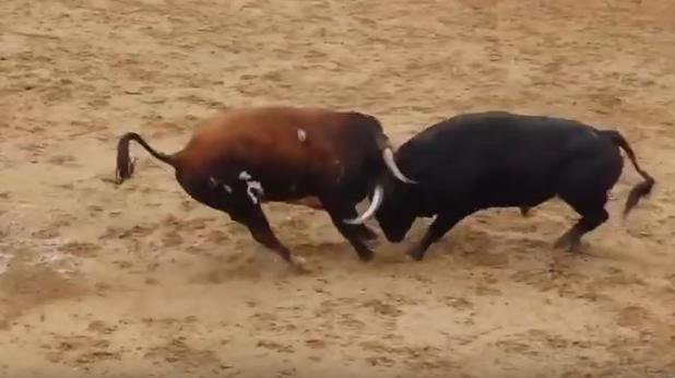 La imagen del vídeo de YouTube del impacto entre los toros