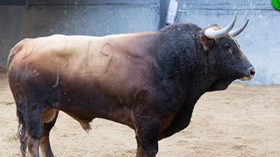 Tercer toro