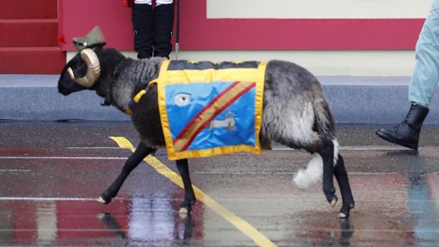 «Miura», la mascota de la Legión