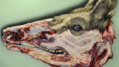 Detalle de «Cabeza de ciervo», óleo de 2011