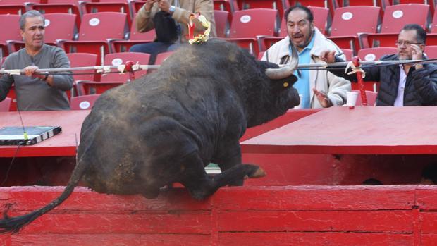 El toro «Ochentón» saltó de esta manera al callejón