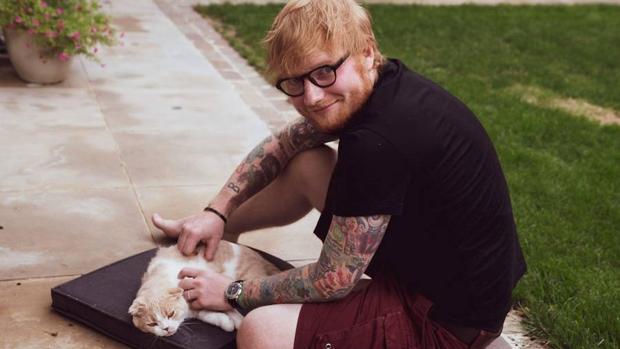 Sheeran, con uno de sus gatos