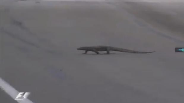 Fórmula 1 | GP de Singapur:  Un lagarto gigante atraviesa la pista delante de Verstappen