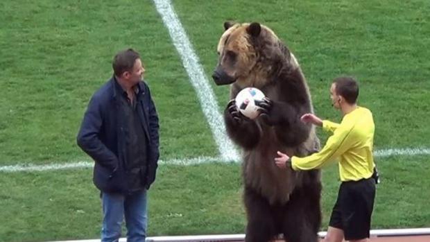 El oso entrega el balón del partido al árbitro