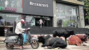 El crecimiento indio, a paso de elefante